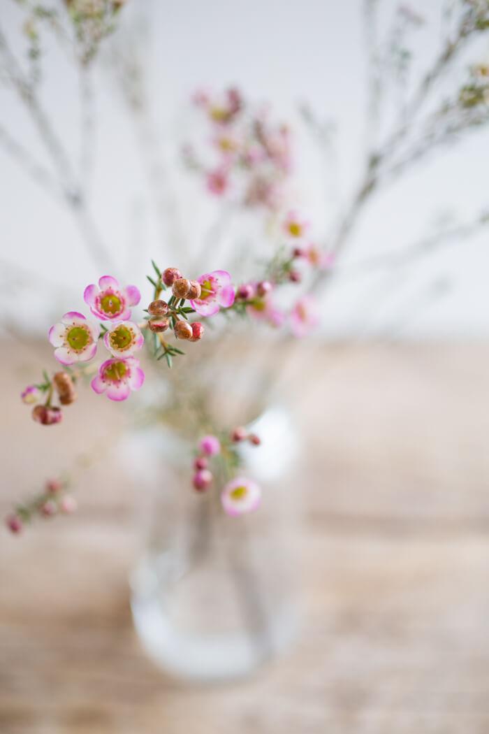 my favorite winter flowers