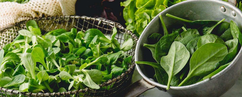 Verschiedene frisch gewaschene Salate